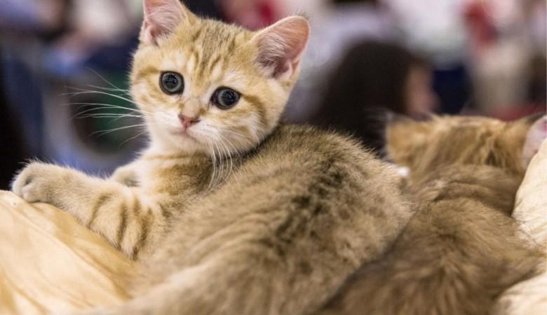 Полицейские поставили на учет алтайских школьниц, зарубивших котенка