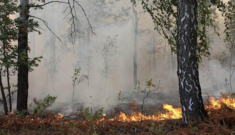 Площадь лесных пожаров в Туве превысила 1 тыс. га