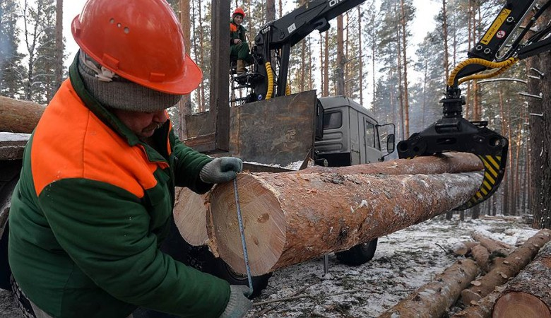 Бурятские лесники вырубали здоровые деревья под видом больных