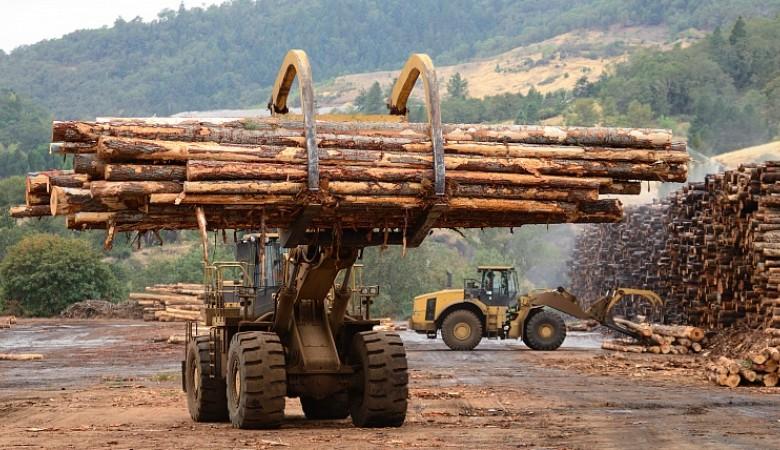 Красноярский экспортер леса «забыл» вернуть выручку на $600 тыс.