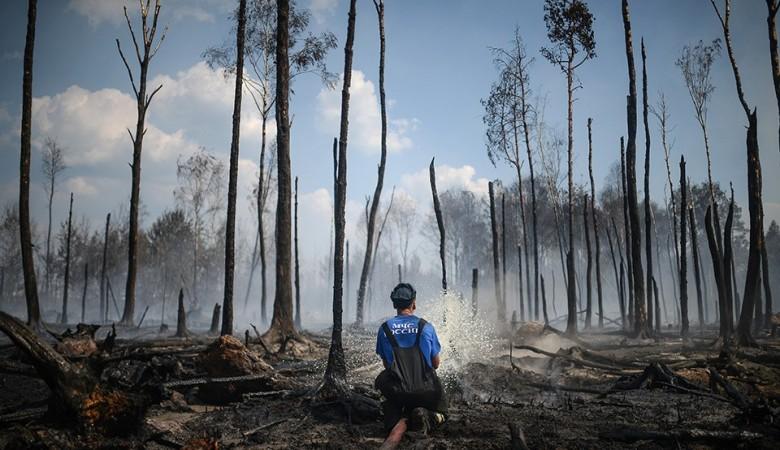 В Забайкалье решили не тушить 73 из 83 лесных пожаров