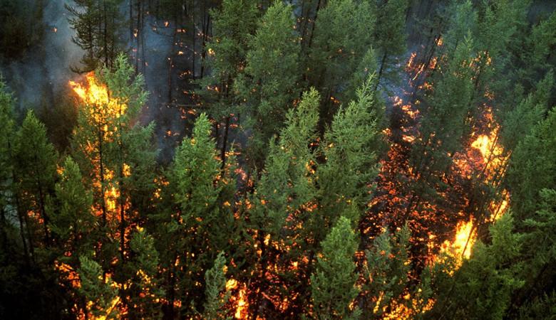 Площадь лесных пожаров на севере Иркутской области вновь растет