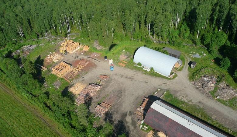 Из Сибири вывезли леса на $2 млрд