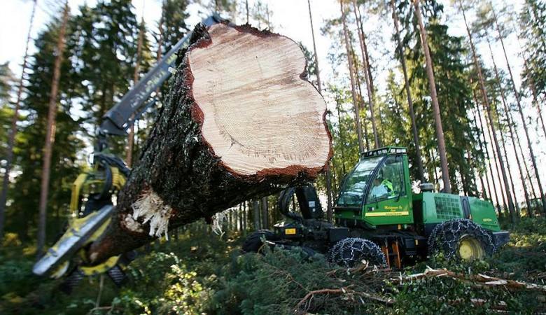 Россия может запретить экспорт леса в Китай - глава Минприроды