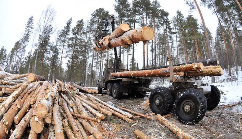 Экспорт лесоматериалов из Сибири за 9 месяцев увеличился на 4,8%