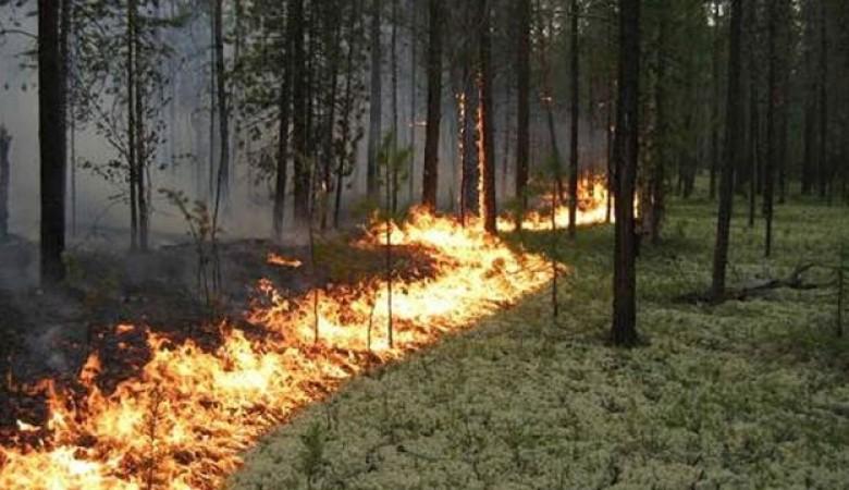 Влесах Киренского района действует режим чрезвычайной ситуации