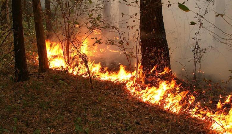 Три пожара продолжает действовать вМуйском районе Бурятии
