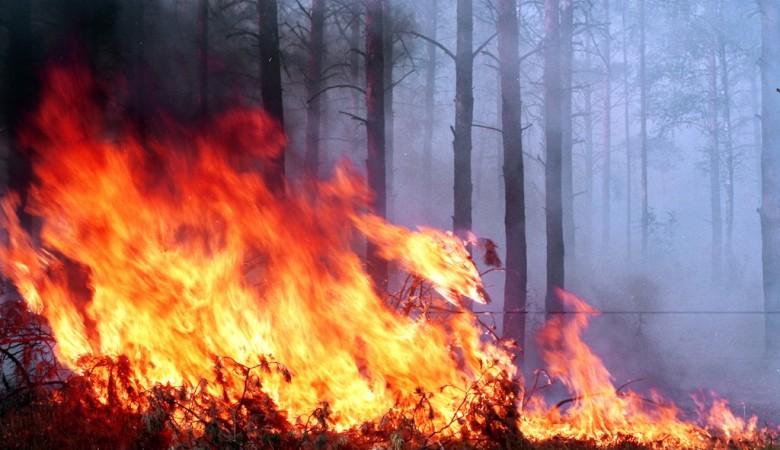 Площадь лесных пожаров в Забайкальском крае выросла вдвое