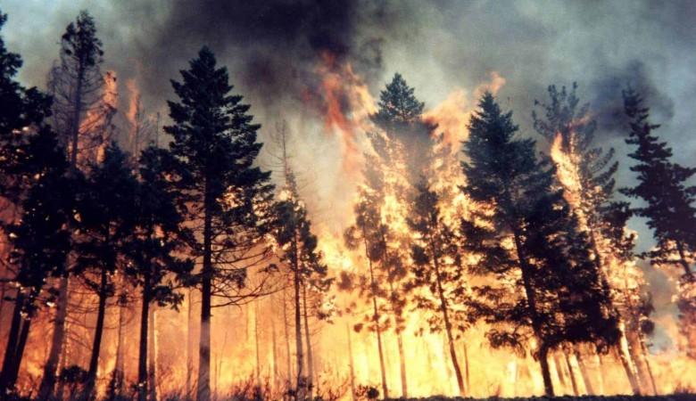 Иркутские власти продлили особый противопожарный режим до 1 августа