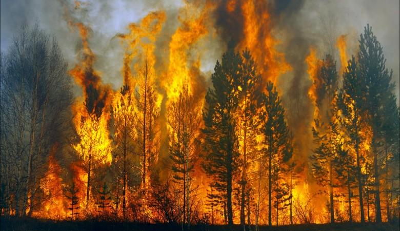 Площадь лесных пожаров в Забайкалье выросла в 2,5 раза