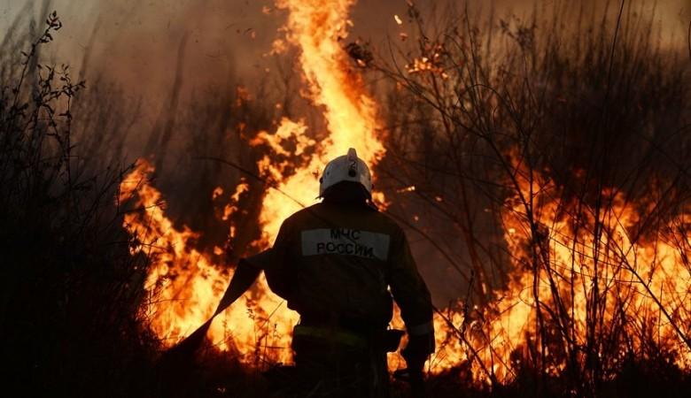 Общая площадь лесных пожаров в Красноярском крае составляет почти 800 тыс. га