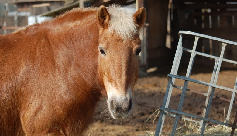 В Туве лошадь тяжело травмировала пятилетнюю девочку