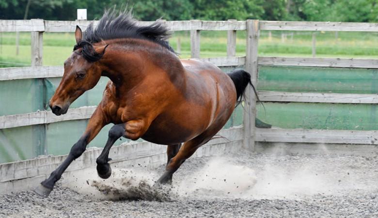 Первую туристическую породу лошадей планируют вывести на Алтае