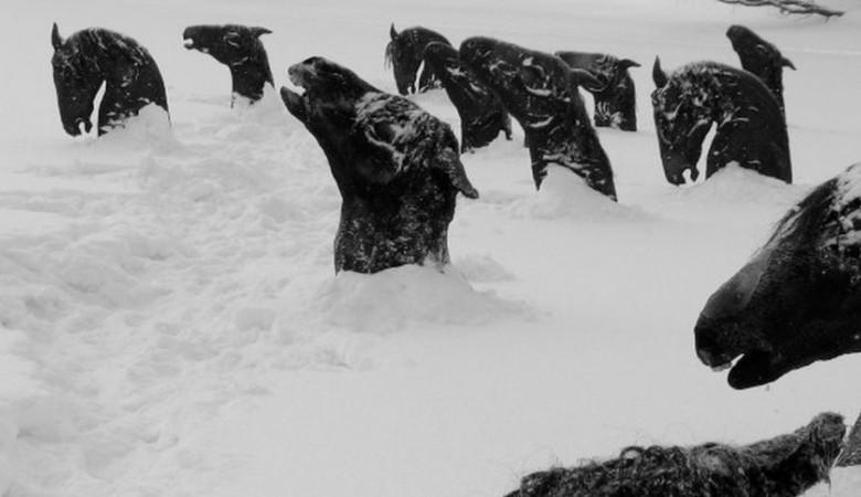 ВОмской области отыскали 15 трупов вмерзших влед лошадей