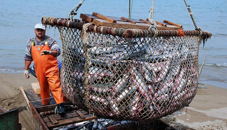 Хакасия обменяет свой уголь на лосось с Камчатки