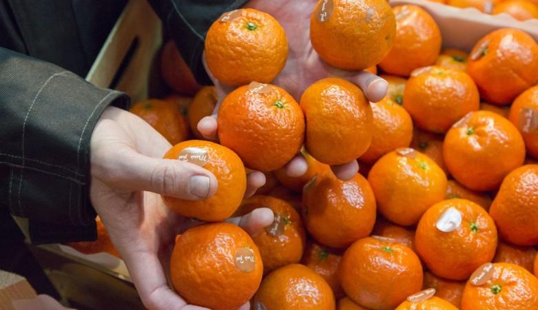 Жителей Новосибирска напугали зараженными гриппом мандаринами