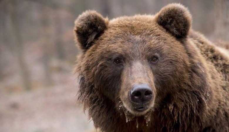 Возбуждено дело о незаконной охоте, в которой мог участвовать губернатор Левченко - ГП РФ