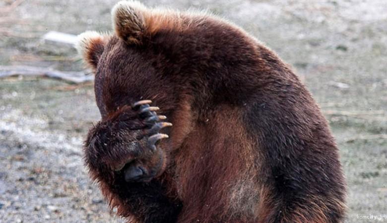Медведь, державший в страхе поселок под Иркутском, застрелен спецназом