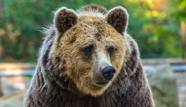 Житель Тувы вступил в тайге в бой с медведем и выжил, укусив его за язык