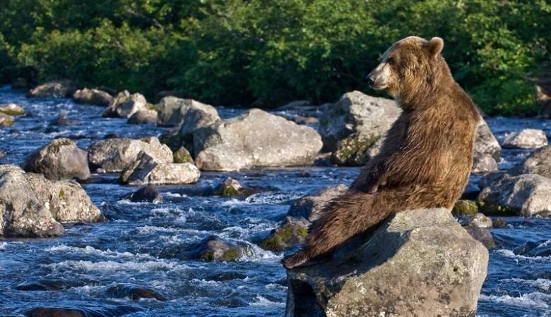 Редкий подвид медведя попал в фотоловушку на Алтае