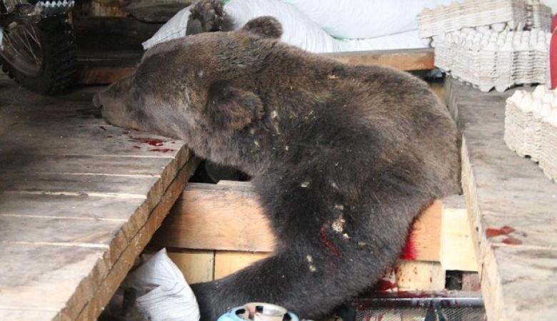Жительница Иркутской области обнаружила медведя в гараже