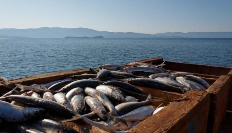 Минсельхоз с 1 октября запрещает вылов омуля на Байкале