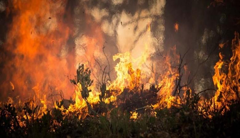 В МЧС предупредили об опасности природных пожаров в Алтайском крае
