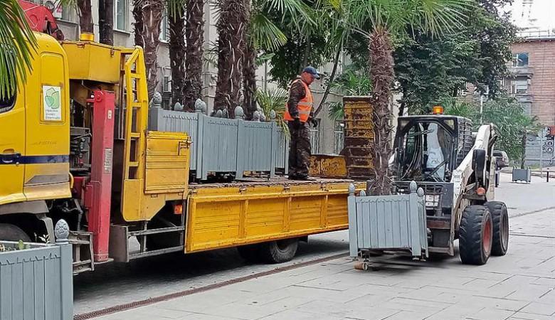 Красноярские уличные пальмы увезут в специальные теплицы