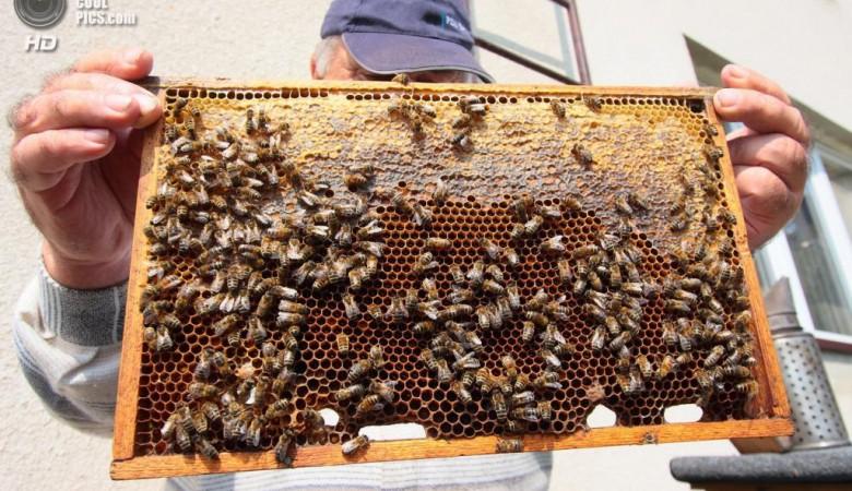 В Красноярском крае пожарные МЧС России займутся пчеловодством