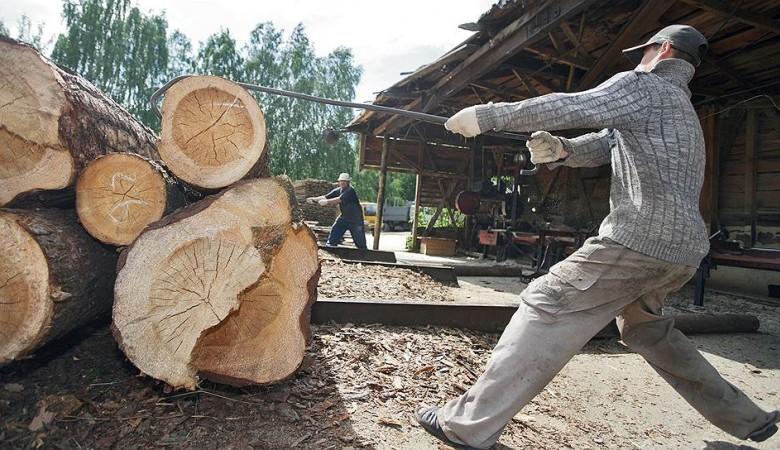 Китайцы хотят инвестировать влесную отрасль Бурятии неменее 750 млн. руб.