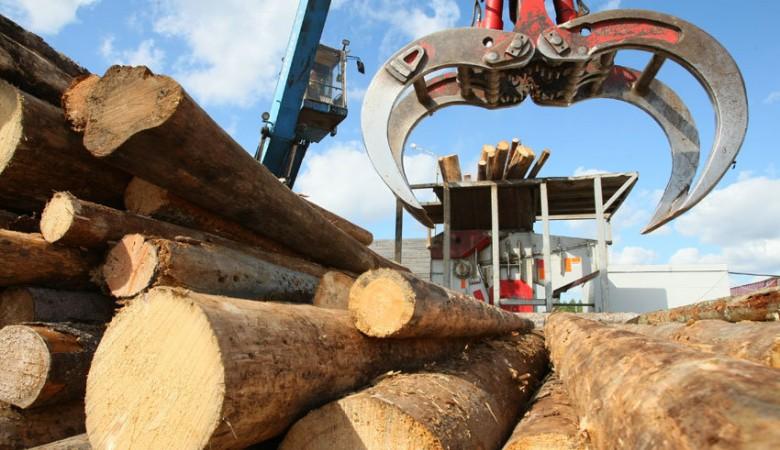 В Красноярском крае построят два завода по глубокой переработке древесины