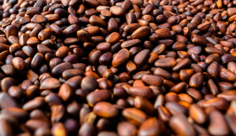 В Республике Алтай проверяют качество кедровых орехов