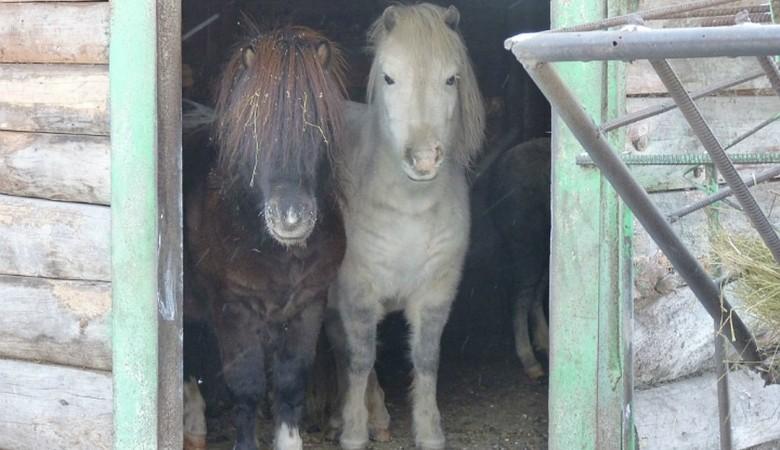 Два пони пытались покинуть Омск через железнодорожный вокзал