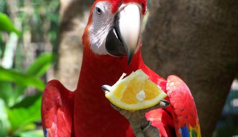 Омский попугай-мальчик снес яйцо в день игры России с Испанией, теперь ему подбирают женское имя