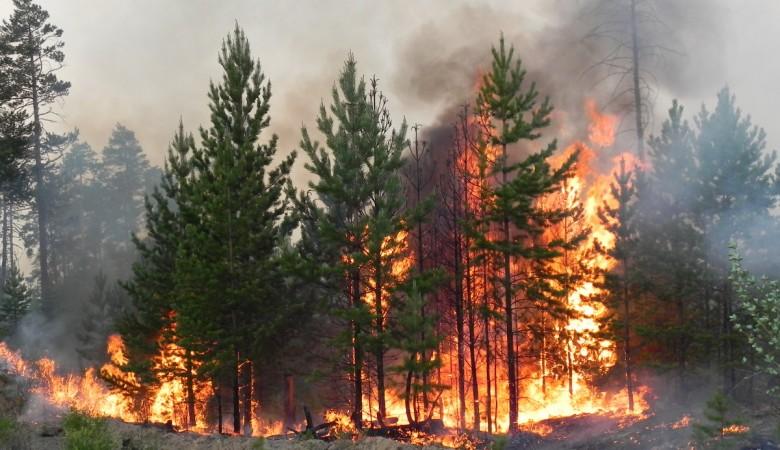 Пожароопасный сезон в Алтайском крае начался на неделю раньше обычного