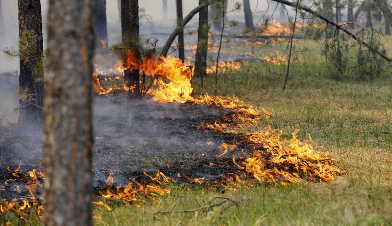 В Туве возят воду на лошадях для тушения лесного пожара на границе с Саяно-Шушенским заповедником