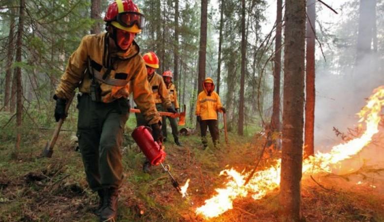 Количество лесных пожаров в Забайкалье сократилось вдвое