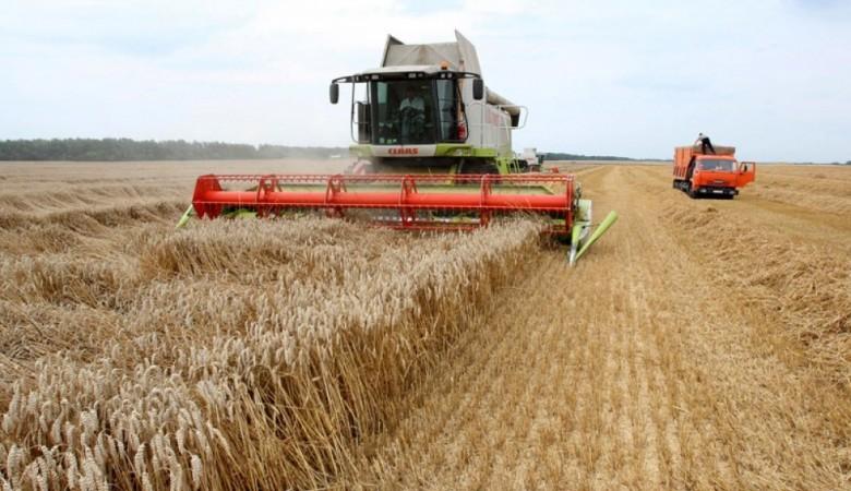 Урожай рапса в Алтайском крае бьет прошлогодний рекорд