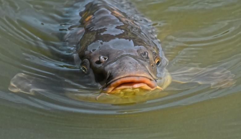 В рыбе томского рыбзавода вновь найдена ртуть