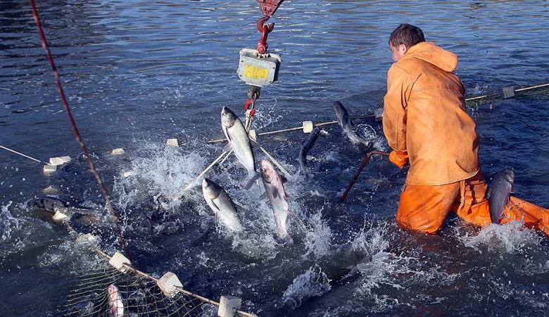 Массовая гибель рыбы зафиксирована на второй реке в Иркутской области