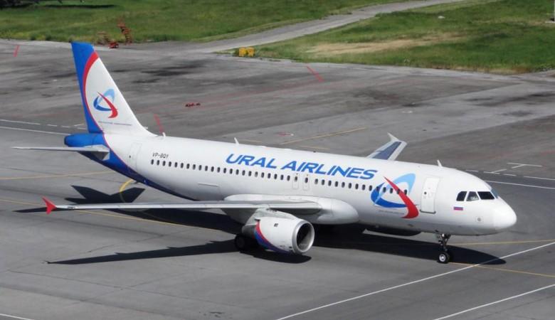 Куропатки повредили самолет в Омске, вылет в Москву задерживается