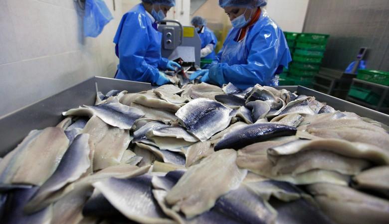 280 тонн растаявшей рыбы задержали вНовосибирске