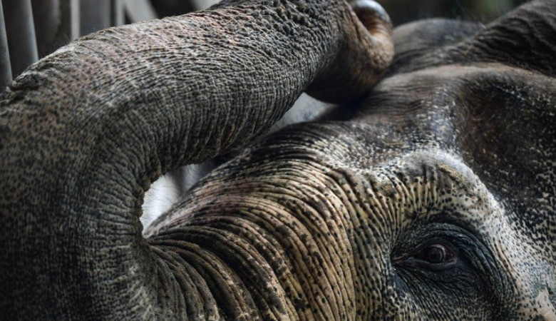 Два слона сбежали из кемеровского цирка