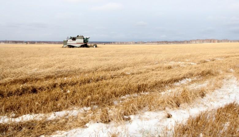 Уборка урожая вХакасии приостановлена из-за выпавшего снега