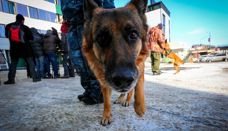 Работник красноярского управления ФСИН схвачен вподъезде снаркотиком «шоколад»