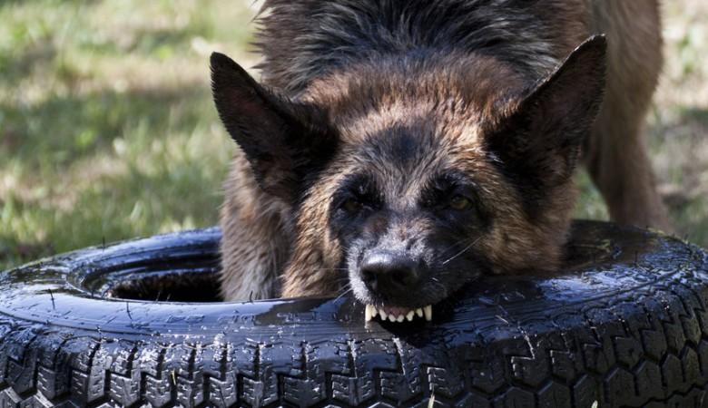 НаЛевобережье Омска собачка искусала 9-летнего ребенка