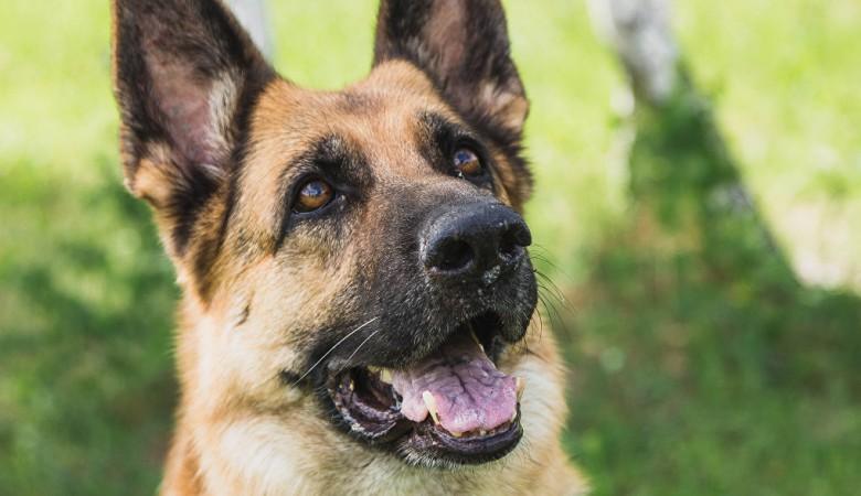 В Бурятии на выборы пришла собака с паспортом в зубах