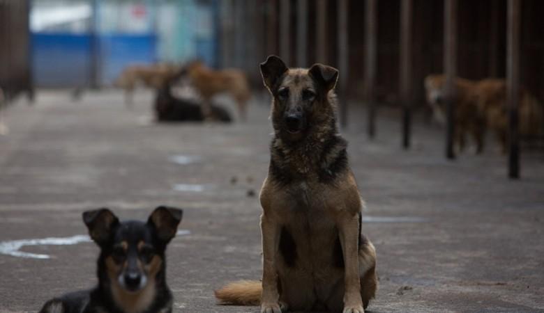 В Томске установят латунную собаку - памятник-копилку для помощи бездомным животным