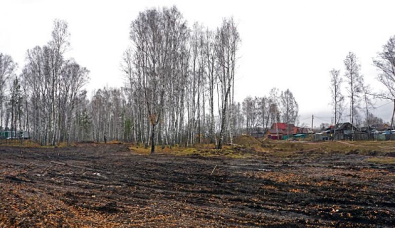 Из-за Универсиады в Красноярске вырубят больше 26 тысяч деревьев