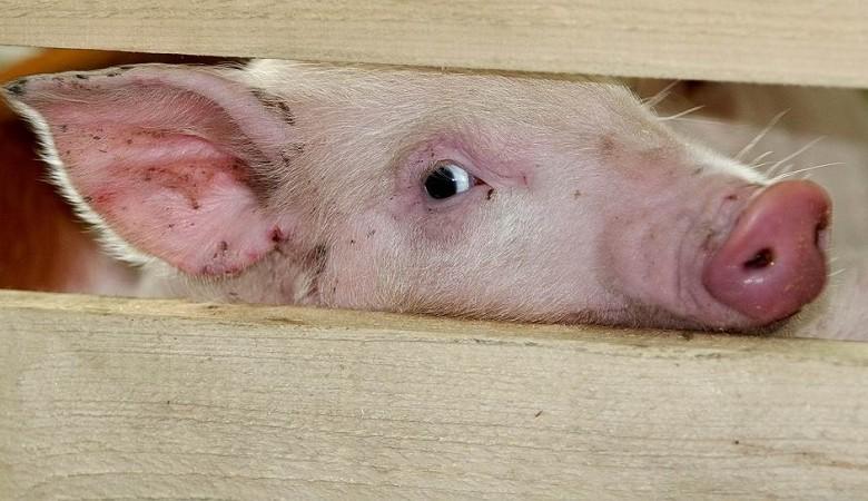 Белоруссия разрешила поставки из Омской области кормов для животных из-за отсутствия АЧС
